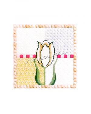 white tulip with yellow, purple, and white block background and pink border