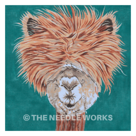 alpaca with hair covering eyes on teal square background